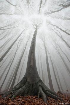 http://virtuellife.centerblog.net/rub-arbres--41.html