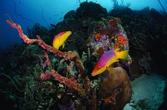 Bonaire diving article