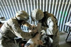 Tell Congress to End Military Trauma Training on Animals!