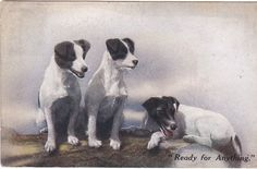 READY FOR ANYTHING - DOGS - 1917 POSTCARD (ref DEB6575/14)