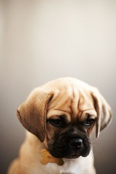 we had a puggle. Her name was Stella. she was psycho.  <- previous pinner. Omg. Bailey is psycho too!