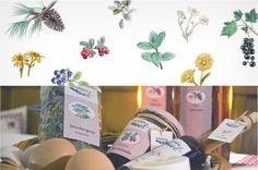 hand drawings, illustrations, food labels, plants, flowers and berries