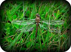 The dragonfly totem represents change.Dragonflies carry messages that deal with deeper thought - and they ask that we pay attention to our deeper thoughts and desires. Dragonfly lives a short life, and it knows it must live to the fullest with what it has.