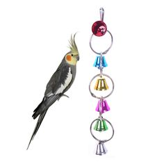 Bird Supplies Search For Flights 1pc Funny Pet Parrot Toy Bird Hollow Bell Ball For Parakeet Cockatiel Chew Fun Cage Toys Accessories Random Color Jade White Home & Garden