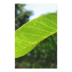 Closeup of walnut leaf lit by sunlight stationery - pattern sample design template diy cyo customize