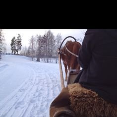 Sled ride. Life is good.
