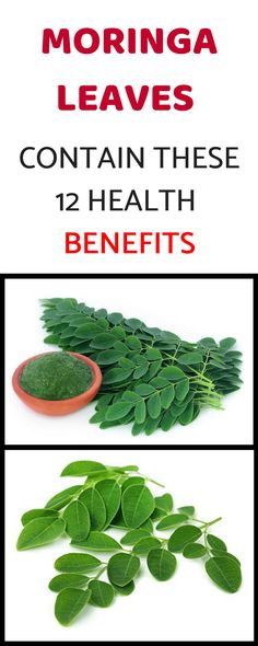 Moringa Leaves contain These 12 Health Benefits