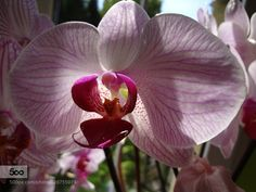 Orchid by jerzyhuzarski #nature