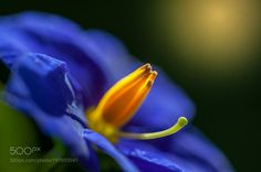 blue-yellow by ex123ce