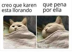 Funny Spanish Memes, Spanish Humor, Funny Relatable Memes, Karen Memes, Club Penguin, Animal Memes, Rottweiler, Cat Memes, Funny Pictures