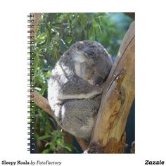 Sleepy Koala Notebook Adorable photograph of a sleepy koala with it's head and limbs tucked in tight for a nap in the tree.