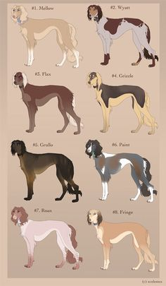 Dog fact of the week: The first domestic dog was likely bred in Ancient Egypt and is the direct ancestor of the Saluki.