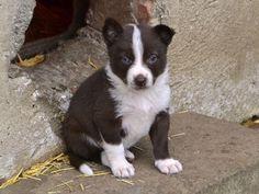 Mawlch Rufus