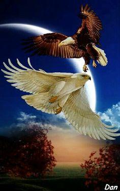 Eagle Images, Eagle Pictures, Nature Pictures, Native American Pictures, Native American Artwork, Beautiful Birds, Animals Beautiful, Aigle Animal, Nicolas Vanier