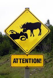 moose warning sign - pay attention