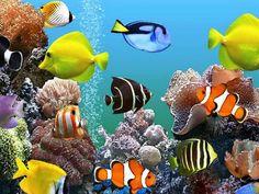Bukan Hoax Ini Cara Mudah Buat Wallpaper Bergerak Di Windows Clock Wallpaper, Wallpaper Keren, Parrot Fish, Aquarium, All Fish, Paint Drying, Colorful Fish, Creative Activities, Relaxing Music