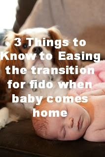 Pets and Pregnancy: 3 Things to Know to Easing the transition for fido when baby comes home