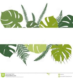 Related image Ferns, Plant Leaves, Tropical Background, Drawings, Plants, Image, Banner, Banner Stands, Tropical Wallpaper