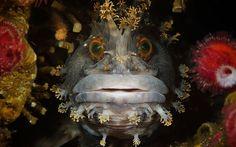 Stunning Sea Life: University of Miami's Underwater Photo Contest ...