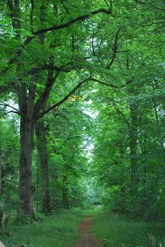 Woods. So serene. I'd adore owning a small residence in a lush wood like so :)