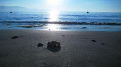 Wallpaper sun, sea, light, beach, coast, wet, particles, garbage