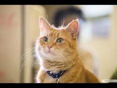 Уличный кот по кличке Боб (2016) На реальных событиях - YouTube