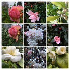 Selection of plants by Moss and Green garden design Gardening, Rose, Flowers, Plants, Design, Pink, Garten, Roses, Lawn And Garden
