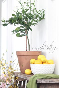 FRENCH COUNTRY COTTAGE: DIY::Bring Spring indoors with dwarf trees
