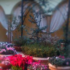 The garden of ASO