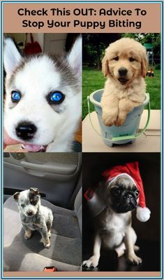 Finding Your Best Options For Puppy Obedience Training - Dog Training Tips and Tricks Puppy Obedience Training, Training Classes, Dog Training Tips, Training Programs, Sources Of Stress, All The Way Down, New Puppy, Stay Fit, Behavior