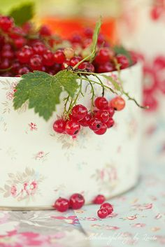 Currants in pretty tin. Blackberry, Raspberry, Fruits And Veggies, Vegetables, Red Cottage, Red Berries, Summer Berries, Shades Of Red, Cranberries