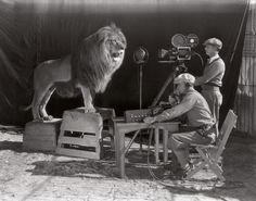 If you have ever watched a film by Hollywood studio Metro-Goldwyn-Mayer, you undoubtedly remember a lion roaring in the opening credits. The first filming of the now world famous MGM opening credits occurred in Hope that lion got royalties. Rare Historical Photos, Rare Photos, Vintage Photographs, Vintage Photos, Iconic Photos, Vintage Stuff, Metro Goldwyn Mayer, Top Photos, Photos Du