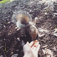 Alice's adventures in Wonderland saw her stumble across a very hungry squirrel...