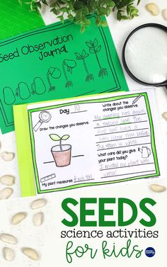 Easy seed science experiments for kids learning about the plant life cycle. Activities for dissecting seeds, parts of a seed germinating seeds with link to the observation journals we used, plus FREE printable plant life cycle anchor charts. Plant Experiments, Plant Science, Science Experiments Kids, Science Education, Science For Kids, Outdoor Education, Preschool Science, Science Ideas, Science Lessons