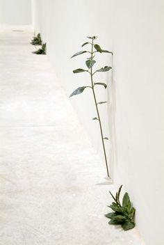 Tony Matelli. Weed, 2008