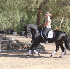 1000+ images about Primoroso XXXIII ~ PRE Stallion ~ For Sale on ...