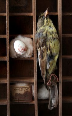 Taxidermy bird