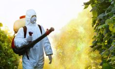 EPA Classified Roundup as Carcinogen 30 Years Ago…But Mysteriously Reversed Decision  http://www.care2.com/greenliving/epa-classified-roundup-as-carcinogen-30-years-ago.html