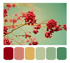 One of these greens on my living room walls. Red Color Schemes, Red Colour Palette, Color Palate, Bedroom Color Schemes, Muted Colors, Living Room Red, Family Room Design, Bedroom Green, Colorful Garden