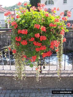 Flower box Flower Boxes, Flower Containers, Flowers, Malaga, Container Gardening, Sidewalk, City, Poland, Green