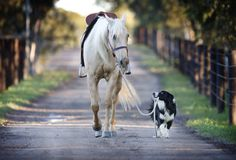 My dream team. I love the look the dog is giving the horse.