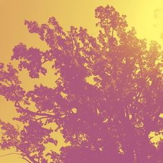 #heatwave #oaktree