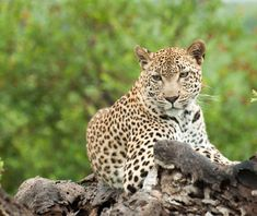 4 Day 3 Night Luxury Safari Packages to Kruger Park / Sabi Sabi Kruger National Park Safari, National Parks, Sand Game, Private Games, Luxury Tents, Wildlife Safari, Luxury Packaging, Game Reserve, African Safari
