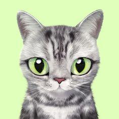 Lindos Gatos Gatos Divertido Fresco Gatos Kawaii Gatitos Meow Kitsch Caja de Papel Pegatinas