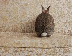 Crush Cul de Sac - I just know that rabbit is going to town trying to shred that pretty couch cushion . . .