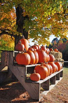 Pumpkins at Moulton Farm in Meredith, New Hampshire courtesy Stef Martin.