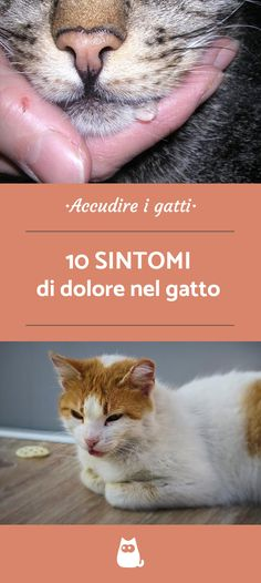 Donne sesso anale storie