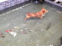 Bravo, from Indonesia, swimming with the fishies