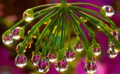 Grandmas Dreams~ droplets of water