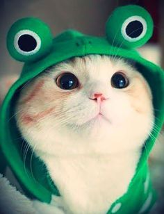 Adorable cat in a frog hoodie!